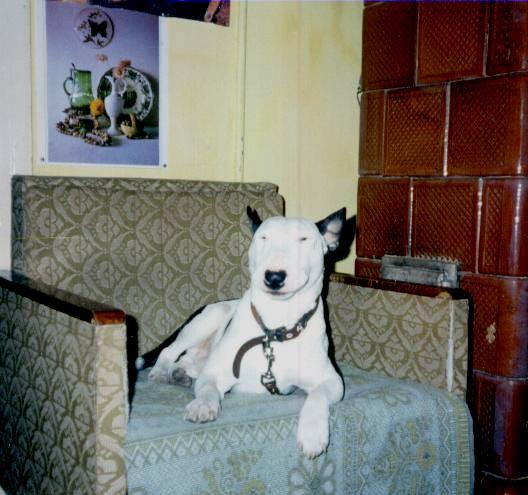 Фото бойцовых пород собак.